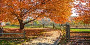 fall-photo-300x150